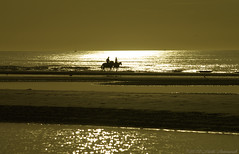 Belgian coast (Natali Antonovich) Tags: belgiancoast seasideresort seaside seashore seaboard northsea sea nature landscape sunset horizon water sun sky reflection silhouette horse horses horseman horsemen couple pair lifestyle romanticism romantic relaxation animals tradition