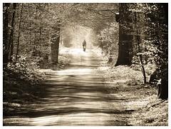 The chappel (Gert Vanhaecht) Tags: canonsx720hs belgium gertvanhaecht perspective tree zoniënwoud monochrome shadow trees canon pathway light