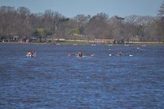 ABS_0075 (TonyD800) Tags: steveneczypor regatta crew harritoncrew copperriver rowing cooperriver