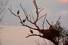 EN  FAMILIA (6toros6) Tags: alfredo aficionados azul d7100 flickr12days juego nikon luz navarra naturaleza paisaje cielo funes tronco natualeza bichitos color