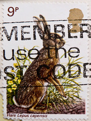 great stamp Great Britain 9p Hare (Lepus capensis, rabbit, Kaphase, Hase, Feldhase, konijn, Kaninchen, nyúl, 兔子, bunny, ウサギ, кро́лик, lièvre, lapin, أرنب ) (stampolina, thx for sending stamps! :)) Tags: rabbit hase konijn kaninchen nyúl 兔子 bunny ウサギ кро́лик lièvre lapin أرنب coelho conejo królik liebre lepre coniglio greatbritain england unitedkingdom grossbritannien storbritannien gb uk commonwealth