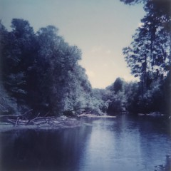 Polaroid Week Day 3 - Lazy River Days (dreamscapesxx) Tags: instant polaroid theimpossibleproject polaroid600businessedition impossible600colorfilm bytheriver outforawalk beautifulblues wilderness oldflorida unspoiled hillsboroughriver johnbsargeantpark thonotasassafl snapitseeit polaroidweek roidweek daythree