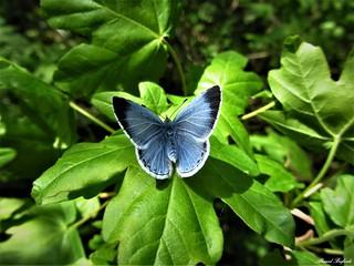 Butterfly 1213
