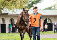 Game Face (Casey Laughter Media) Tags: racehorse horseracing thoroughbred gallop horse horses keeneland racing racetrack lexington kentucky