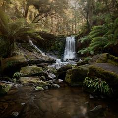 Horseshoe Falls Mt Field National Park Tasmania (Peter & Olga) Tags: 2017 april olgabaldock phillipnorman russellfalls tasmania tour waterfall ferns le light peaceful serene d810