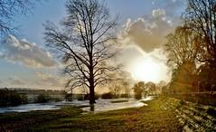 High Water (farmspeedracer) Tags: flooding germany evening april spring light alarm saturday easter freshet sunbeam sun sunrise sky tree
