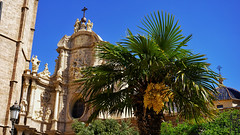 CathedralPalm (Alessandro Manfredini) Tags: valencia spagna espana spain erasmus flower flowers orange cathedra church sand grass garden gardens architecture palm palms macro shadow shadows tree trees spring summer sea food panorama beach oceanografic sunset jellyfish animal animals flag colors night face