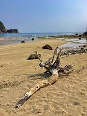 Drift wood (Lens_sky05) Tags: philippines island limestone cove sand bluesky sea driftwood beach baler