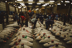 Tsukiji inspection; Tokyo, Japan (erik-peterson) Tags: 2016 d3s erikpeterson family japan october tokyo vacation tsukiji market fish tuna auction frozen freeze sale inspection