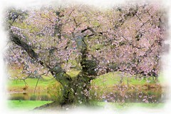 Spring Watercolor (chantsign) Tags: watercolor park tree blossom colorful spring treetrunk water pink