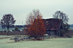 on the way home (Ralaphotography) Tags: autumn herbst tree barn countryside landschaft natur landscape nature frosty november fall