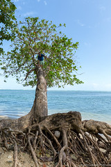 13. Cahuita, Costa Rica-28.jpg (gaillard.galopere) Tags: 2017 5d 5dmkiii apn america amérique animaux cr cri canon continentsetpays costarica couleur ef eos g11 mkiii nature travel vegetations voyage ameriquecentrale amériquecentrale arboles arbre arbres cahuita canonphotography centralamerica centroamerica color colorful compact forest foret forêt hood ovelanding overland overlander powershot sauvage traveler tree trees végétation wild wood