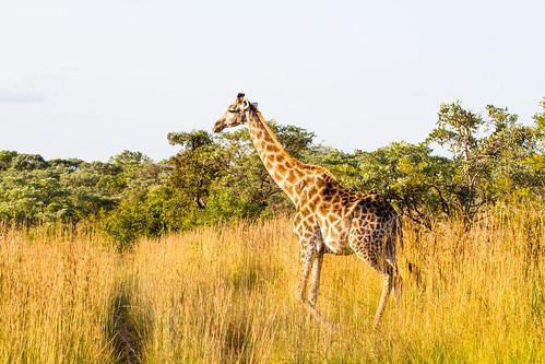 KrugerParkREIZ&HIGHRES-100