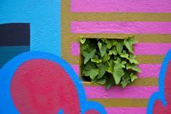La nature de l'art (Gerard Hermand) Tags: 1704287890 gerardhermand france paris canon eos5dmarkii formatpaysage malakoff rue street art streetart peinture paint graffiti tag graf ivy lierre mur wall bombe spray