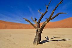 Sossusvlei (Jacques Teller) Tags: sossusvlei namibia namibie deathvalley dune dunes sand sky desert tree dead colour colours deadvlei jacquesteller nikond3200 200mm contrast landscape surreal surrealist dalí salvador valley shadow salt pan minimalist art nature paysage surréaliste vallée sable arbre mort ciel