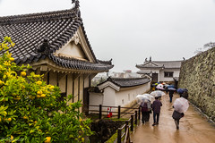 IMG_1515 (Evgeny Gorodetskiy) Tags: himeji asia tree lemon outdoor autumn castle japan park himejishi hyōgoken япония jp