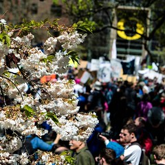 Spring Blossoms, and Science March (dsgetch) Tags: marchforscience sciencemarch science blossoms spring uofo universityoforegon trumpamerica eugeneoregon eugene cascadia pnw pacificnorthwest willamettevalley protest rally