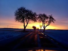 Sonnenaufgang und Bäume