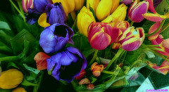 Flowers heal me. Tulips make me happy. I keep myself surrounded by them as soon as they start coming to the GARDENS... (zairakhan) Tags: loveforflowers flowers tulips bouquet indoor beautiful