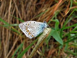 Butterfly 1223