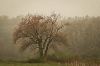 ~Foggy Day~