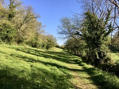 A country walk in Devon (Dave_S.) Tags: torbryan devon england uk gb footpath spring sun sunshine great britain united kingdom british english countryside walk tree trees rural tranquil peace peaceful sunny holiday vacation iphone se may green lush beautiful growing growth grass