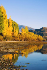 Yellow and blue (Le Fabuleux Destin d'Amélie) Tags: newzealand otago wanaka autumn lakewanaka glendhubay camp