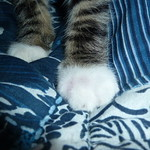 My Left Paw-Kitten Lost Fight Against Bee thumbnail
