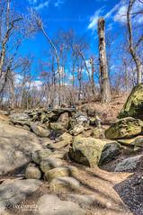 Drought (JayCaps) Tags: park trees newyork newjersey stream centralpark drought nationalhistorymuseum jaycaps sonynex jaycapilo nex5r