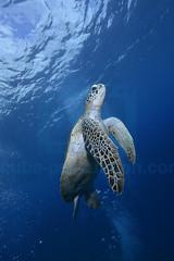 2012 11 METTRA OCEAN INDIEN 4950