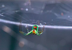 Spider Slider Sunday (donjuanmon) Tags: