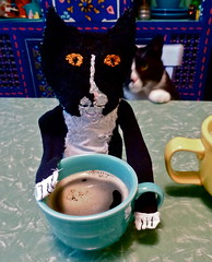 Coffee with Henry & Henry? (J/Bryant) Tags: cat sock puppet tuxedo jealousy