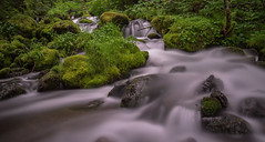 DSC_3276 (ChanceKphoto) Tags: motion nature water rock moss nikon rocks long exposure mossy d600