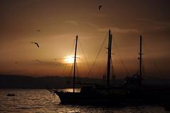 Sunset Beykoz (NATIONAL SUGRAPHIC) Tags: sea seagulls seascape boats seaside sunsets istanbul fishingboats deniz beykoz martlar tekneler gnbatmlar balktekneleri sugraphic
