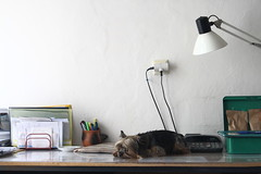 Have a break (Ali Gardener) Tags: sleeping dog chien lamp animal table lampe office break sleep can lampa dormir pes cancelar officetools stul lavieenbureau