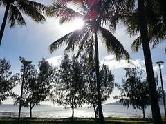 Cairns Esplanade (tomikotchi) Tags: morning beach australia palm esplanade queensland cairns uploaded:by=flickrmobile flickriosapp:filter=nofilter