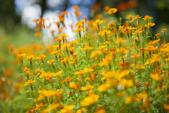 Botanische Tuinen Utrecht (siebe ) Tags: flowers flower holland dutch utrecht nederland thenetherlands bloemen bloem 2013 botanischetuinen