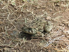 Toad (Keith Michael NYC (4 Million+ Views)) Tags: nyc ny newyork si toad statenisland mountlorettouniquearea