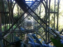 IMG_4433 (cdjbjunior) Tags: parque botnico curitiba jardim tangu