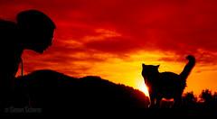 in twos (Blochmntig) Tags: two pet love cat sunrise liebe zuzweit mygearandme mygearandmepremium mygearandmebronze mygearandmesilver