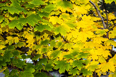 IMG_1189 (moutoons) Tags: fruit jaune automne rouge eau couleurs rivière pont porte nuage gorges tarn marron cascade arbre château champignon brume verte pomme croix feuille poire légume quézac lozère cévennes coing ispagnac