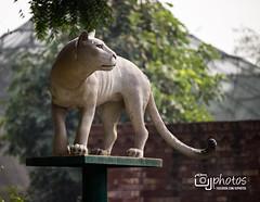 Lahore Zoo (UJPhotos.com) Tags: park elephant tree animals kids children fun zoo wildlife goose ostrich lahore mpnkey