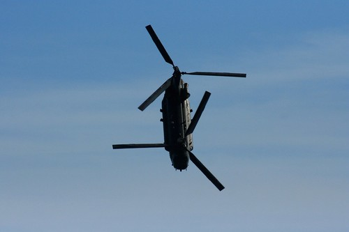 Diving Chinook
