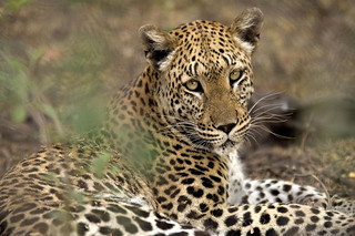 Botswana Okavango Delta Photo Safari 85