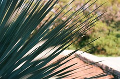 00360012 (2) (lennoxr313) Tags: film austin texas asahi pentax takumar kodak tx ishootfilm spotmatic honeywell smc ektar spotmaticf filmisnotdead mtbonell ektar100