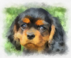 coco (alanpeacock2) Tags: dogs painting puppy coco watercolour photostream cavalierkingcharlesspaniel blackandtan