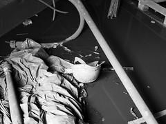 sherdley remec revisit (suzanna_hughes) Tags: urban blackandwhite blackwhite industrial factory exploration derelict sthelens urbanex remec sherldey