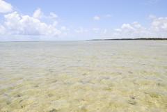 Praia do Patacho - Alagoas (Ccero R. C. Omena) Tags: das praias guas paraso brasileira alagoas transparentes
