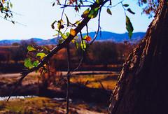 PA030191-22 (25 minutes) Tags: china tree nature forest landscape f14 birch hebei omd 25mm neimenggu em5 omdem5 wulanbu