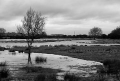 "2014_365010 - Flood Plain • <a style=""font-size:0.8em;"" href=""http://www.flickr.com/photos/84668659@N00/11877827414/"" target=""_blank"">View on Flickr</a>"